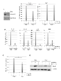 Figure 1: ADAM17 regulates expression levels of inflammatory mediators in macrophages.