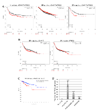 Figure 7:  Increased expression of ADAM17 and PTGS2 correlates with reduced disease and relapse free survival.