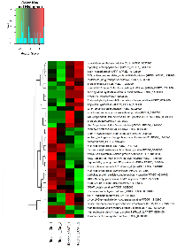 Figure 3:  Differentially expressed genes detected in the trophozoite stage of the P.