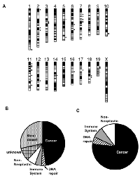 Figure 4:  Patterns of strain haplotype sharing localize candidate regions harboring Trp53-/-  modifiers.